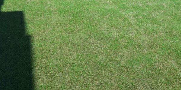 15mm-dekoratif çim halı