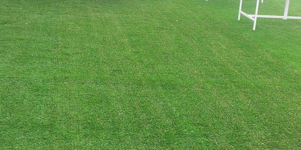 20mm peyzaj çim halı